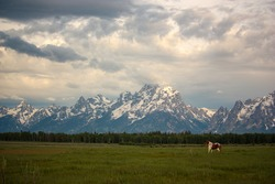 Horses in Pasture in Front of Grand Teton Mountains at Sunrise in Wyoming
