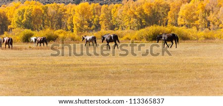 Horses in pasture lined with golden aspen trees