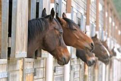 Horses in stable, beautiful animals