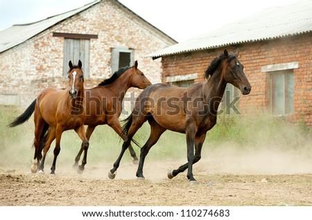 horses in studfarm