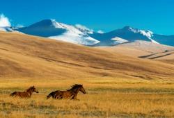 Horses in the Assy Plateau, near Almaty, Kazakhstan