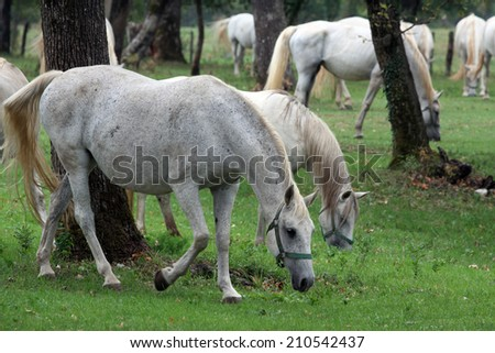 horses in the countryside #210542437