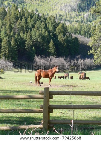 Horses in the forest - stock photo