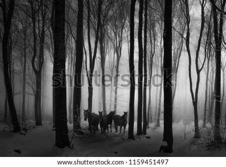 Stock Photo Horses in the forest. Balkan mountains, Bulgaria.