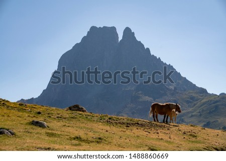 Horses in the hill near Pic du Midi in the mountains of french Pirynees.