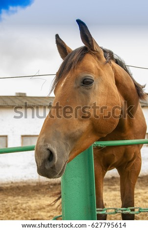 Horses in the pen  #627795614