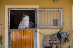 Horses in the stable in farm in deep countryside small town, Czech Republic