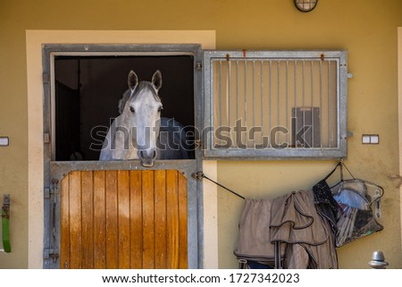 Horses in the stable in farm in deep countryside small town, Czech Republic Photo stock ©