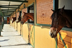 horses in the stables