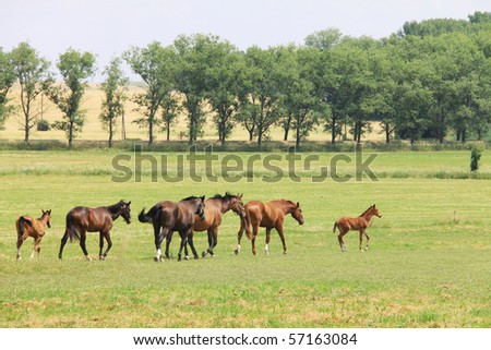 Horses in the summer Landscape
