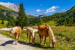 Horses in Val Duron in the Dolomites, Italy