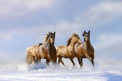 horses in winter