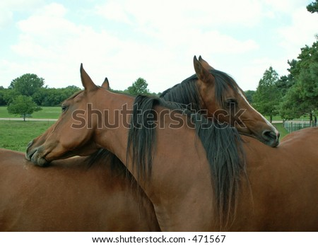 horses intertwined
