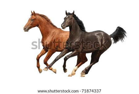 Horses isolated