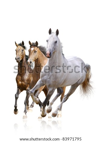 horses isolated - stock photo