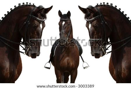 horses isolated on white