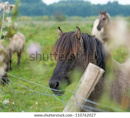 Horses near a fence in summer