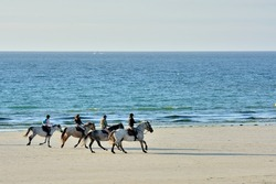 Horses on a beach in Brittany