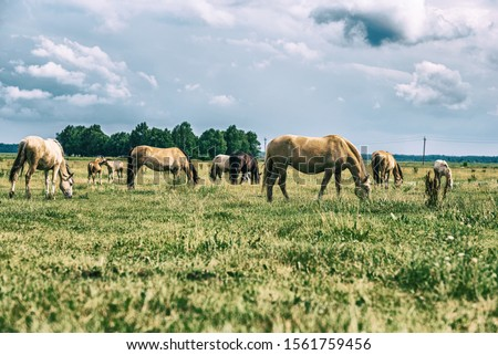 Horses on a field at a farm in summer. Photographed in a High-key. #1561759456