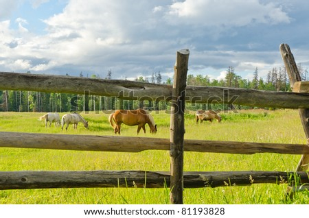 Horses on a summer pasture.