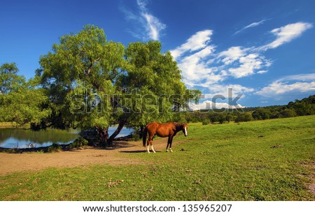 Horses on farm against blue sky