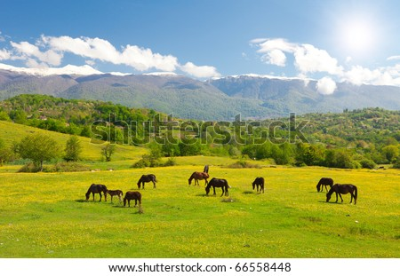 horses on green meadow
