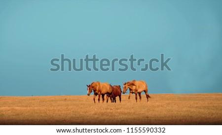 horses on pasture,  grazing horses, animal background, portrait of horse #1155590332