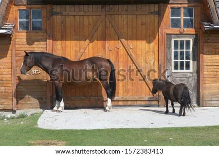 Horses on Rafter Six Ranch, Exshaw, Alberta, Canada