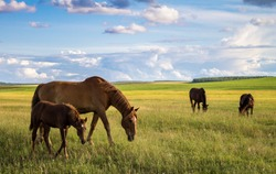 horses on the field, big and little horse