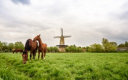 Horses on the fresh green meadow with a mill on the horizon