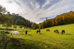 Horses on the hiking trail in the Danube Valley at Bronnen Castle near Beuron in autumn in the Sigmaringen district