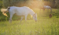 Horses on the meadow on spring
