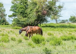 Horses, one with fly mask, in pasture at the East Point Reserve in Darwin, Australia