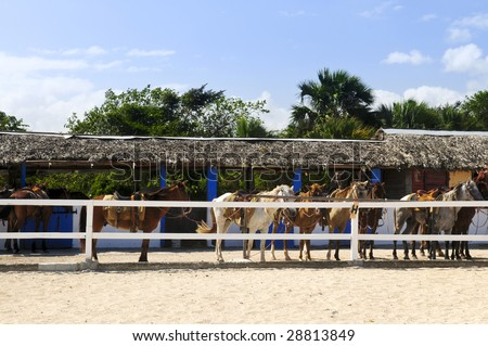 Horses ready to be ridden at stable