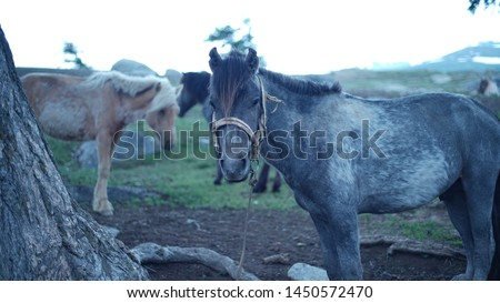 Horses resting in open grasslands of Mongolia  #1450572470