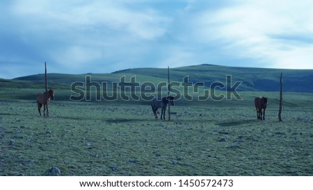 Horses resting in open grasslands of Mongolia  #1450572473