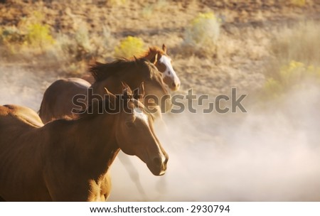 horses running free. stock photo : Horses Running
