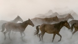 Horses running gallop in group in dust