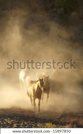 Horses running in a herd encompassed by dust - stock photo
