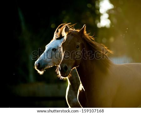 horses running in sunset light