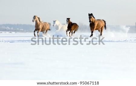 Horses running in winter - stock photo