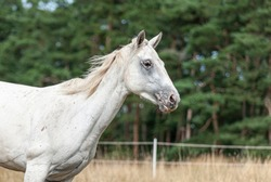 Horses running wild in a pasture