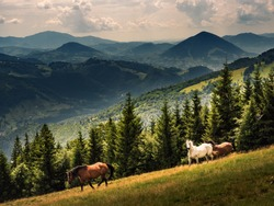 Horses runs freely in the mountains. Wild landscape with horses in summer season into the mountains.