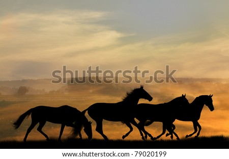 horses silhouettes in sunset