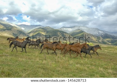 Horses stampede by Montana foothills