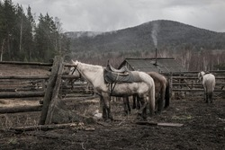Horses stand near the fence in the paddock. A rainy gray day. Country house. Smoke from the chimney. Rural landscape. Farm in the woods.