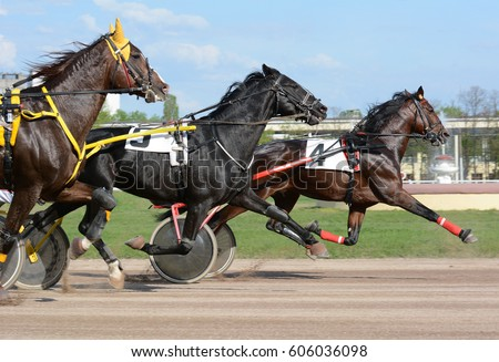Horses trotter breed in motion on hippodrome. Harness horse racing. - Shutterstock ID 606036098
