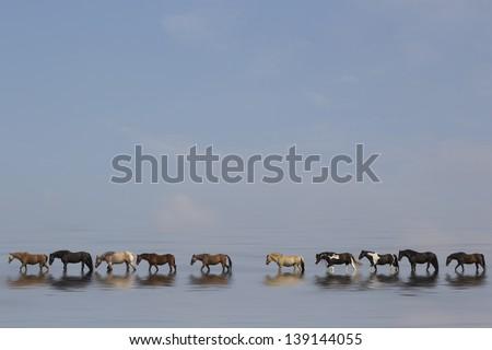 Stock Photo horses  walking along beach