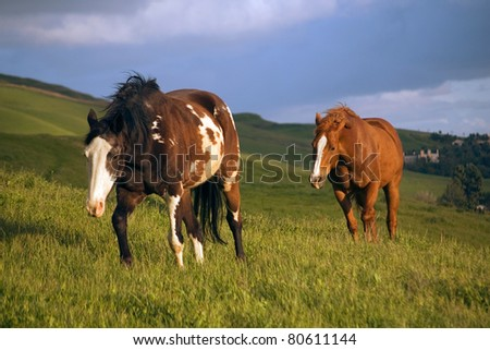 Horses walking in pasture against a stormy sky