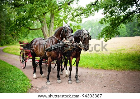 Horses with carriage on the alley of Tsarskoe Selo (Pushkin), Russia